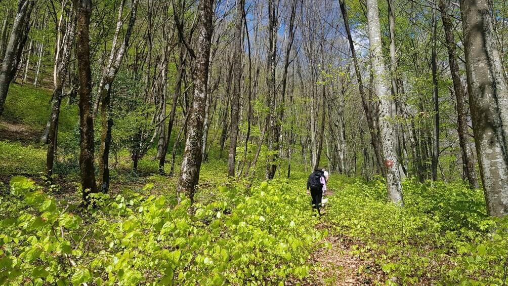 Show item 4 of 5. Hiking in Bosnia & Herzegovina-Cvrsnica -Vidikovac