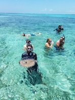 Belize Snorkeling Tour -- Coral Gardens and Shark/Ray Alley