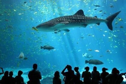 SEA LIFE Ocean World at Bangkok Admisison Ticket