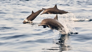 Dolphin Watching In Puerto Escondido
