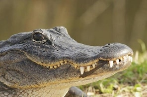 Everglades Adventure | Air boat Tour and Show with Bus Transportation