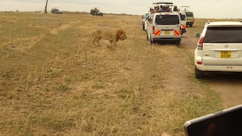 3 Day Maasai Mara Safari from Nairobi ( Small group)