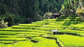 Authentic Ubud Nature Walk