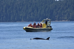 Zodiac Whale Watching from Telegraph Cove