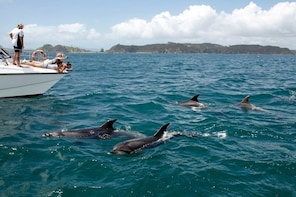 THE BAY OF ISLANDS HOLE IN THE ROCKS CRUISE & DOLPHIN WATCH