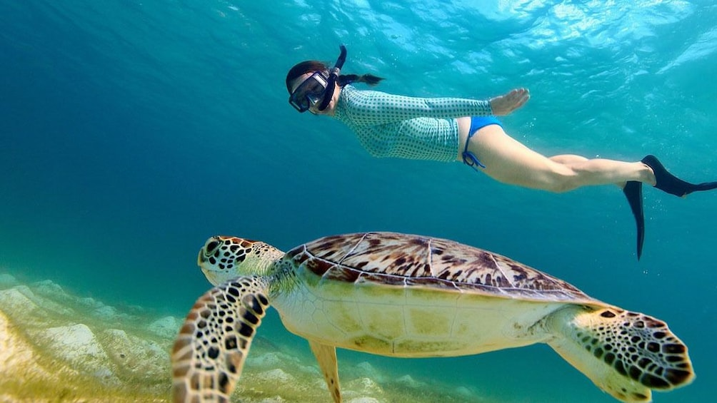 Show item 1 of 5. 3 Gili Lombok Snorkeling Tour with Private Boat