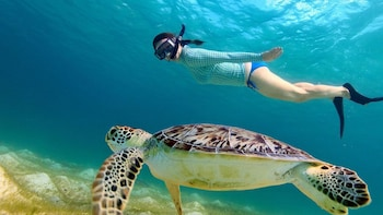 3 Gili Lombok Snorkelling Tour with Private Boat
