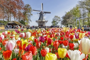 Keukenhof & Flower Fields Guided Tour from Rotterdam