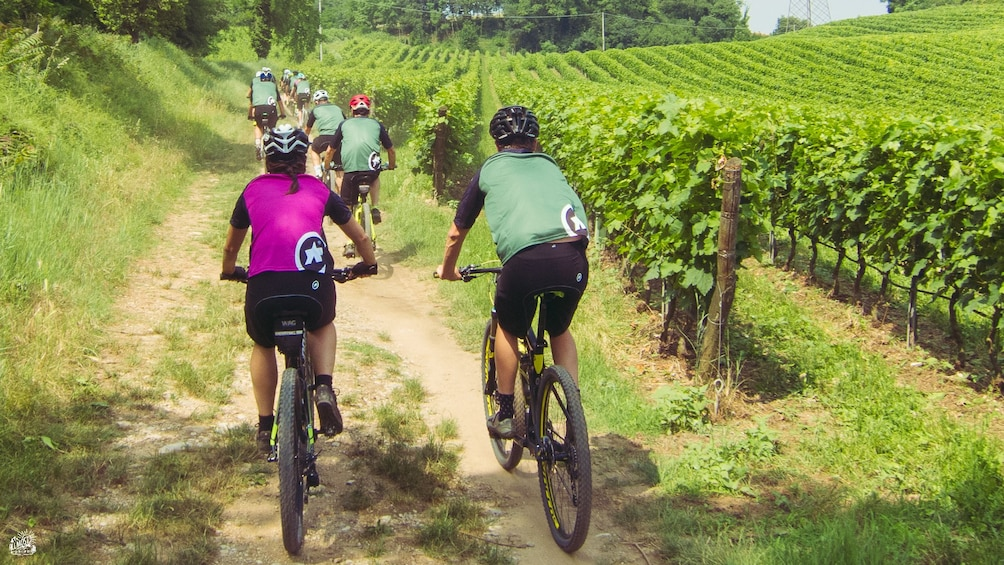 Show item 4 of 7. The lands of Custoza - Garda bike ride for all people