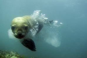 Puerto Madryn: Scuba Dive & Snorkelling with Sea Lions