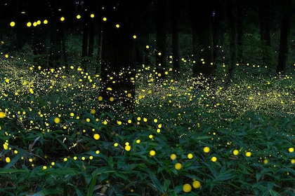 Glittering Night : Fireflies & The River of Life Tour