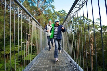Skip the Line: Illawarra Fly Treetop Adventures Treetop Walk Admission Ticket