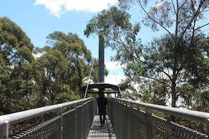 Skip the Line: Illawarra Fly Treetop Adventures Treetop Walk Admission Tick...