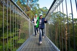 Illawarra Fly Treetop Adventures Treetop Walk Admission