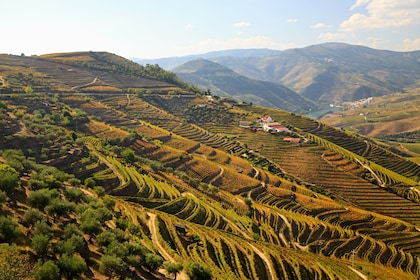 Douro Valley Full-Day with Lunch & Wine Tasting from Braga
