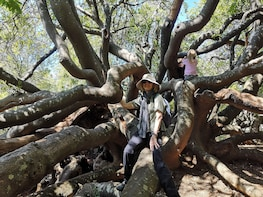Cape Town: Fynbos Nature Walk