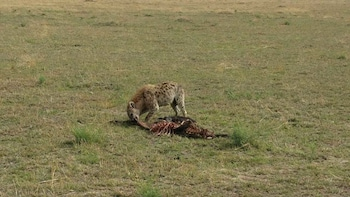 6 Days Maasai Mara, Lake Nakuru, Amboseli Group Safari