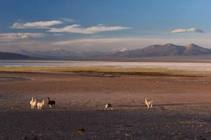 Babes in Huasco