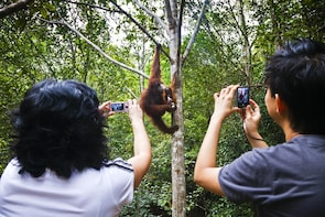 Marvellous Creature Orangutan-Semenggoh Wildlife Center Tour