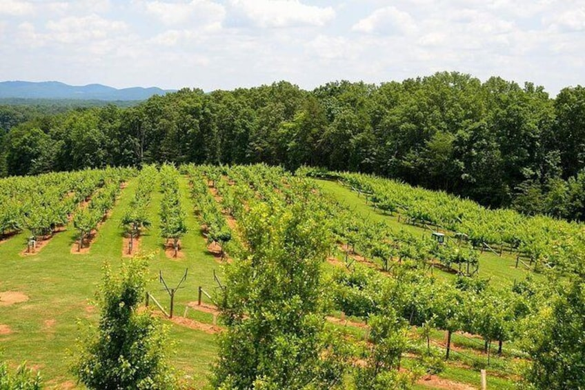 Show item 2 of 6. Private Wine Full Day Tour from Atlanta City by Luxury Vehicle