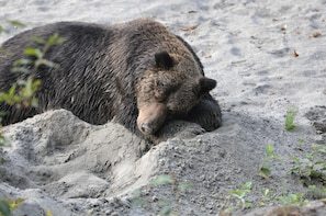 Desolation Sound Tour with Grizzly Bear Viewing - 3 Days