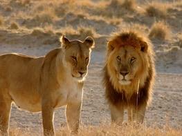 4-Day Sunset Safari