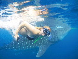 Full-Day Whale Shark + Canyoneering Combination Tour