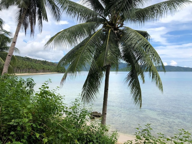 Show item 1 of 1. Private Island hopping in Port barton from Puerto Princesa