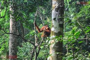 Orangutan Forest Trekking Day Tour - Seat in Coach