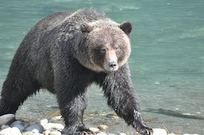 Desolation Sound Tour with Grizzly Bear Viewing - 5 Days