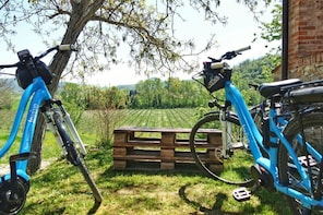 Wine Bike Tour in the Euganean Hills from Venice