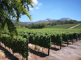 Private Shore Excursion: Full Day Cape Winelands Tour