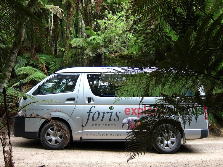 Whirinaki Rainforest Walk - New Zealand's finest forest