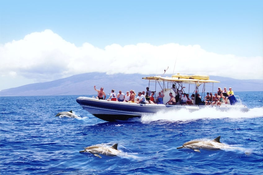 Show item 1 of 10. Lanai Dolphin Adventure