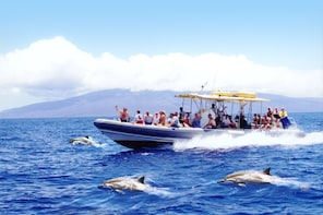 Lanai Dolphin Adventure (4.5 hour tour with 2 snorkel sites)