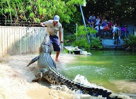 Visit Kuranda + Hartley's Crocodile Adventures