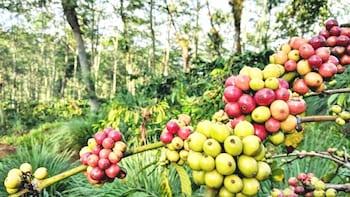 Malang Java Coffee Plantation: An Insider Tour