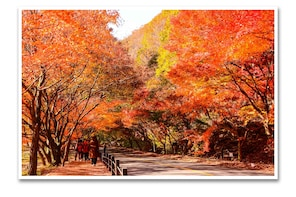 Red Leaves Naejangsan National Park (1 Day tour)