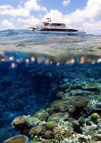 Show item 3 of 4. Silverswift Dive & Snorkel Adventure