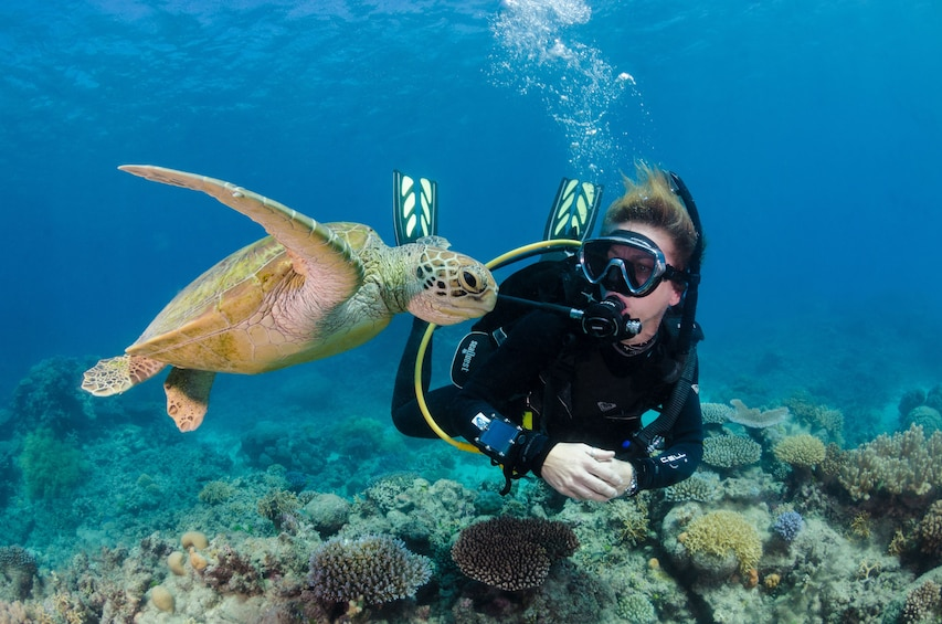 Show item 2 of 4. Silverswift Dive & Snorkel Adventure