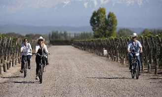 Bike through Wineries and Vineyards, Mendoza - Argentina