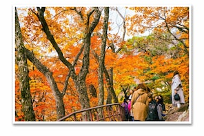 Seoraksan Mountain + Naksansa Temple (Red leaf day tour)