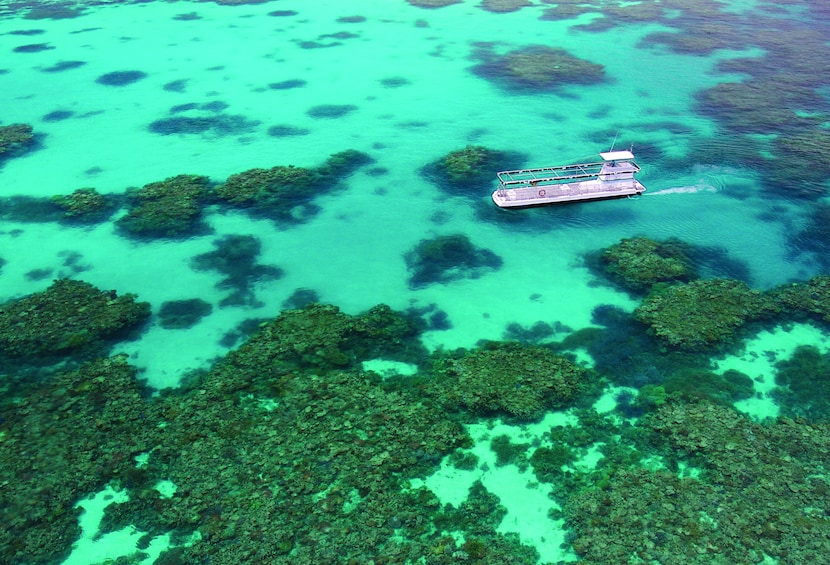 Show item 2 of 8. Quicksilver Great Barrier Reef Agincourt Reef Cruise
