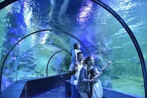 Double Fun: MarinaEye Ferris Wheel + Crocodile Park Aquarium