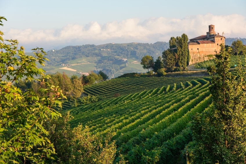 Show item 2 of 9. Private Tour: Piedmont Wine Tasting of the Barolo Region