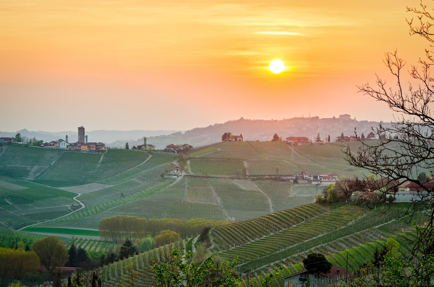 Show item 9 of 9. Private Tour: Piedmont Wine Tasting of the Barolo Region