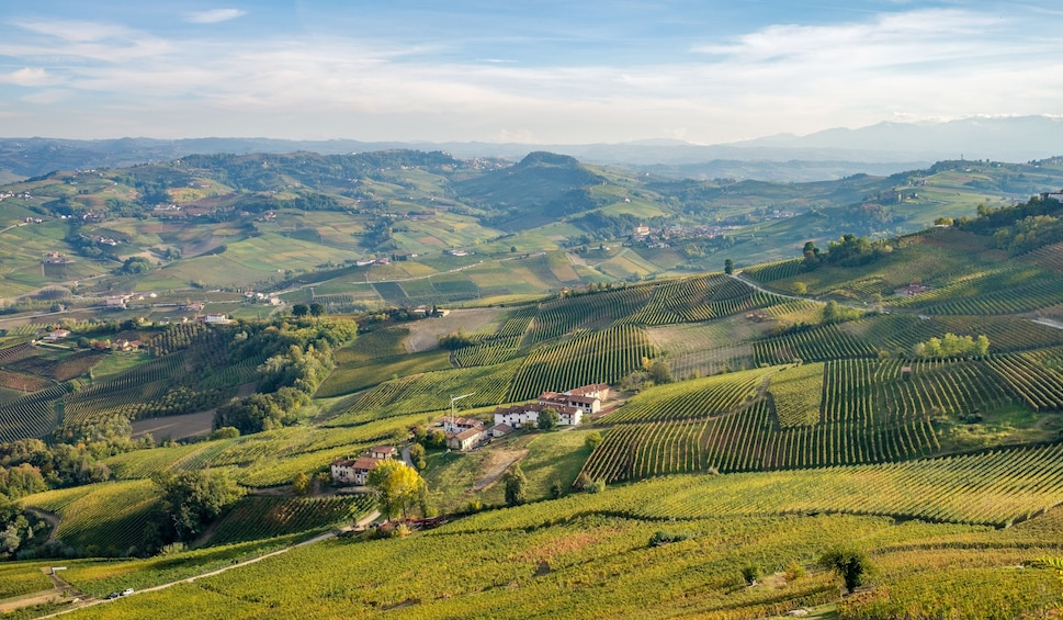 Show item 3 of 9. Private Tour: Piedmont Wine Tasting of the Barolo Region