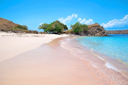Pink Beach in Komodo National Park, famous for its distinct natural pink colors.jpg