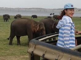 Minneriya kaudulla national park halfdaysafari tour