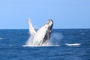 Whale Watching Tour - Cairns